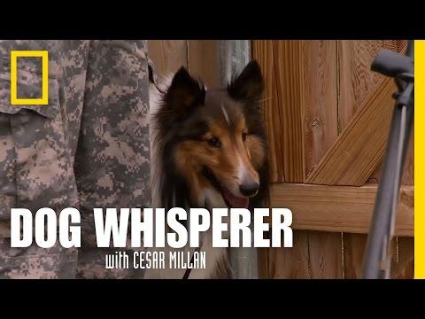 Dog vs. Lawnmower | Dog Whisperer