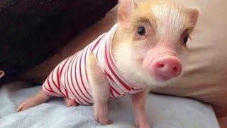Video Love Dogs, Love Pigs - Mercy For Animals download MP3, 3GP, MP4, WEBM, AVI, FLV November 2017