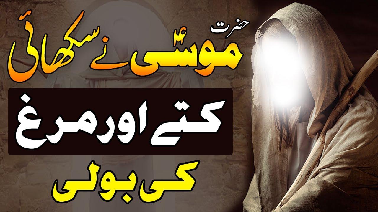 Hazrat Musa AS Ny Sikhae Bandy Ko Kutty Or Murgh Ki Boli - Prophet Musa (AS) Story -  Islam Call