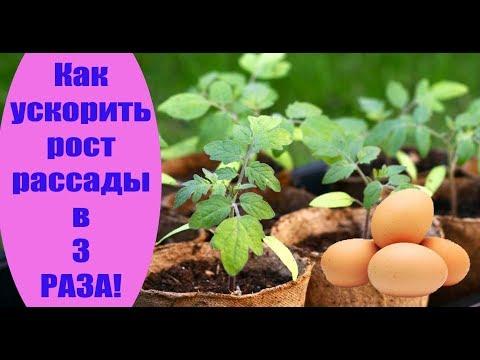 Как ускорить рост рассады в 3 раза. Сад и огород выпуск 211