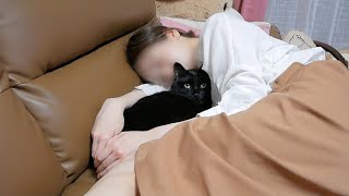 ソファに座っていたら猫と妻に追い出されました