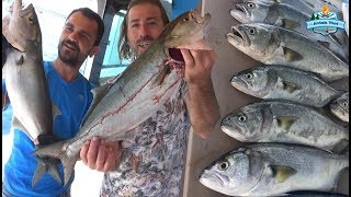 Dev Kofanalar, İnanılmaz Aksiyonlar. Giant Bluefish Catch Here!!