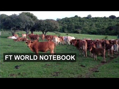 Kenya's hi-tech dairy solution | FT World Notebook