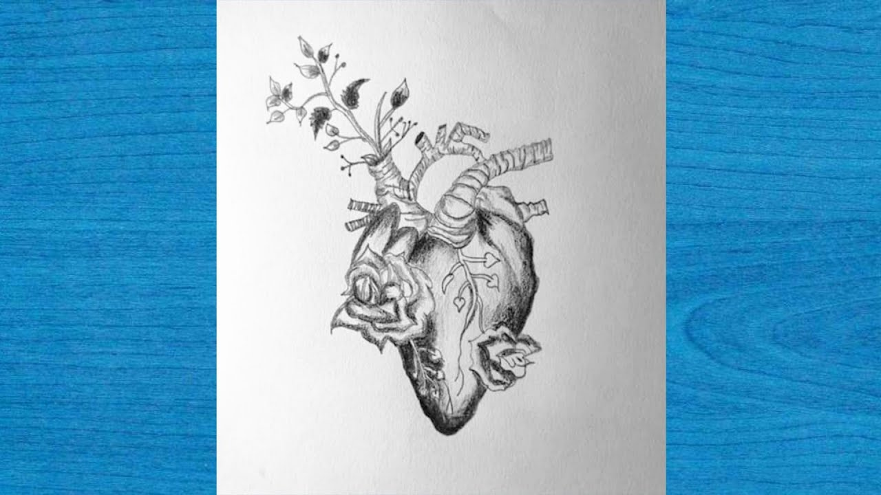 How to draw human heart   step by step   very easy for ...
