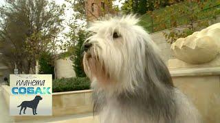 Одис. Планета собак 🌏 Моя Планета