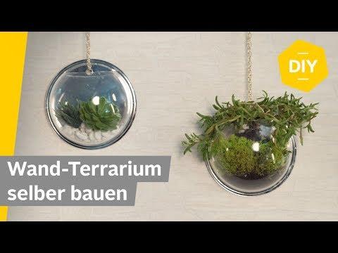 DIY: Terrarium für die Wand selber bauen | Roombeez – powered by OTTO