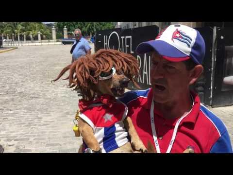 Cuba - Trump Mafia Dog