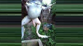 Mutant animals: amazing mutant animals you won