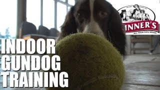 Gundog Training Tips - Easy Indoor Training