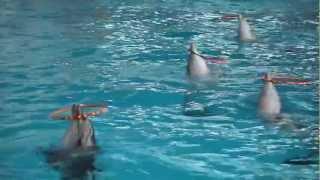 Дельфинарий Набережные Челны. Купание с дельфинами