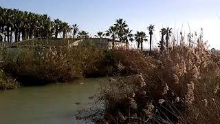 Пальмова Роща в Турции в Сиде
