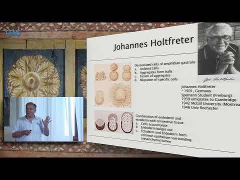Juergen A. Knoblich on Cerebral organoids - modelling human brain development and tumorigenesis