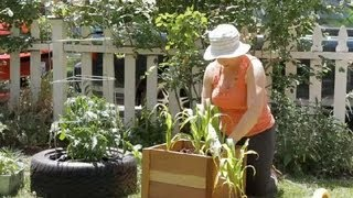How to Plant Corn in Square Plots : Garden Space