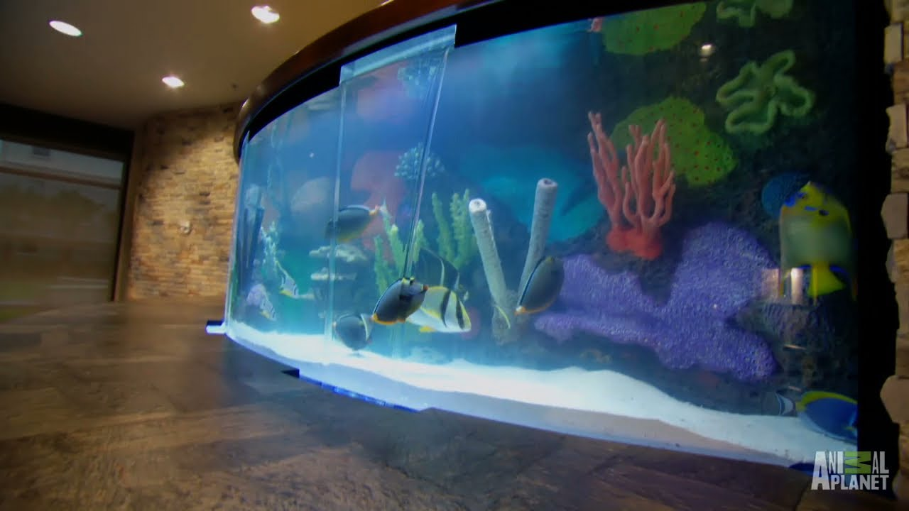 Reveal st leo school tank tanked youtube for Fish tank show
