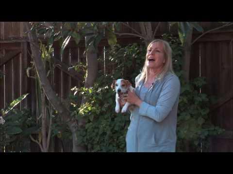 Super Bowl prediction 2017 ,balloon popping dog, Twinkie