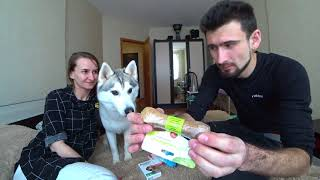 Ништяки для хаски Капеллы. Купаем хаски. Обработка собаки от клещей и блох. Дегельминтизация