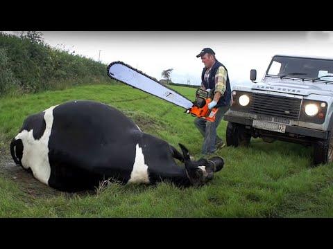 Farm #WithMe Pretty Girl Dangerous STIHL Chainsaw Tree Cutting Cow Milking Cure Cows Feeding Farming