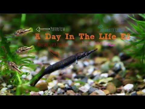 Another Rocket Gar! A Day In The Life...