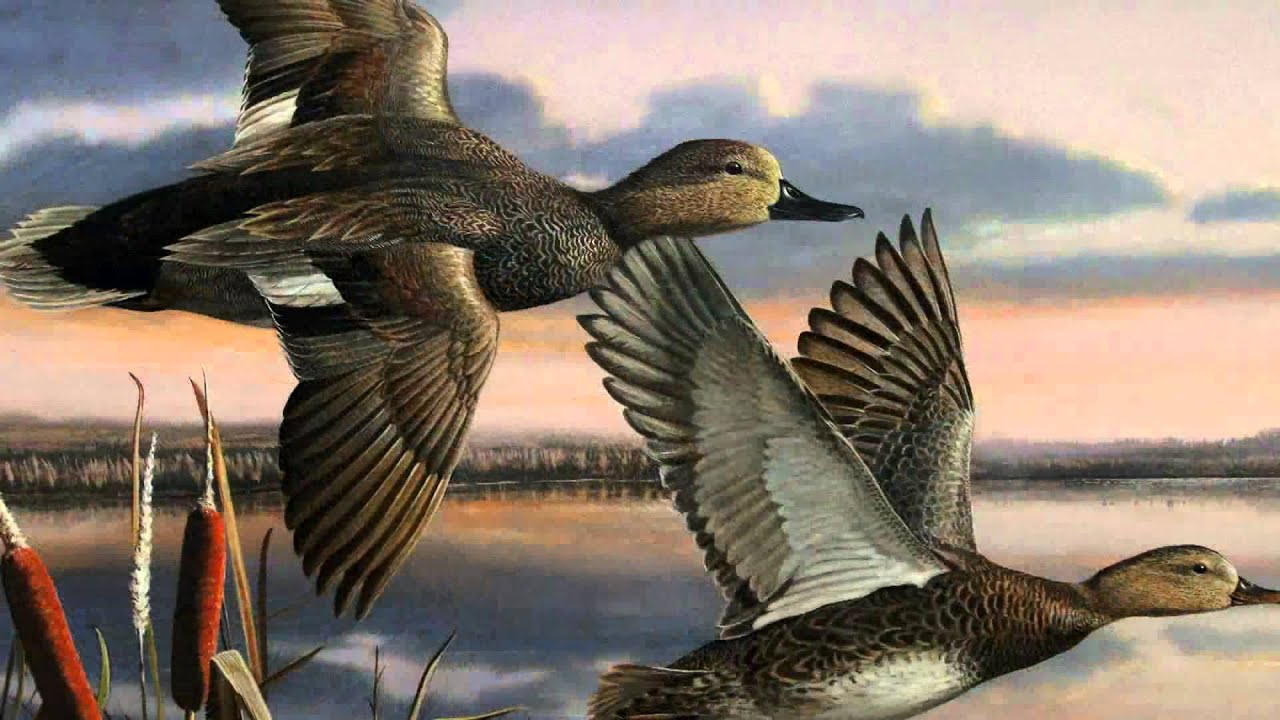 Ldwf 2014 Louisiana Waterfowl Stamp Competition Youtube