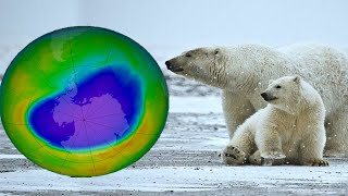 Ozone depletion information and facts - Compilation