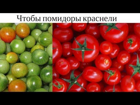 Как зеленые помидоры сделать красными