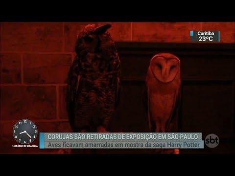 Corujas são resgatadas de exposição após denúncia de maus-tratos | SBT Brasil (01/03/18)