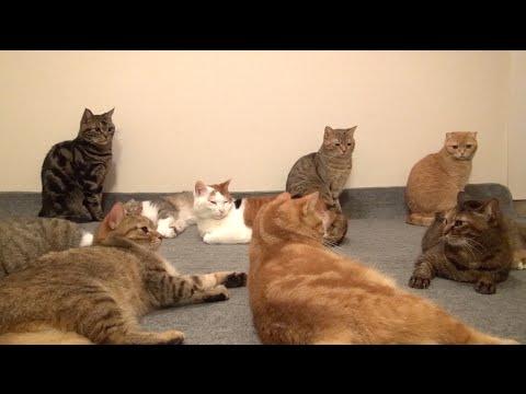 電気カーペットに興奮する9匹の猫 9 cats excited on an electric carpet.