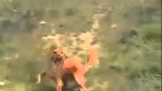 Drum N Bass Freak Dog