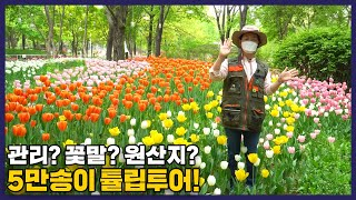 서울숲 50000송이 …