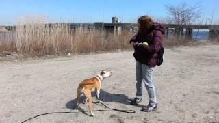 Molly long leash training