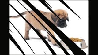 сухой корм для кошек екатеринбург
