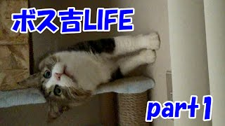 保護猫ボス吉、母だけに見せる無邪気な様子 part1 Boss cat life Part 1 thumbnail