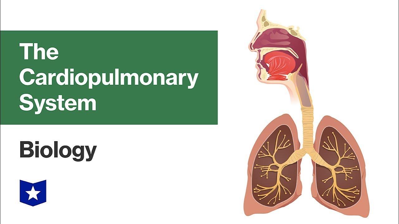 The Cardiopulmonary System | Biology - YouTube