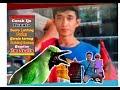 Wow Pedas Cucak Ijo Isian Geraja Tarung Platuk Bawang Renata Latpres Bcb  Mp3 - Mp4 Download