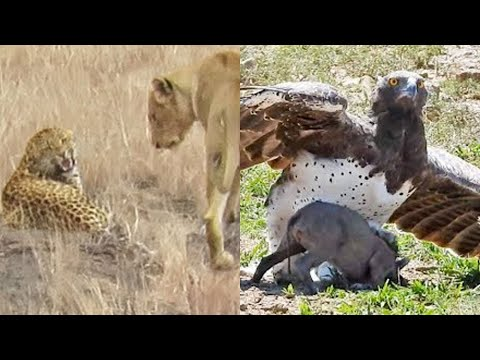 Best Wildlife Sightings of 2019