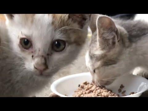 배고프다고 소리 내는 새끼고양이 Kitten meow because hungry