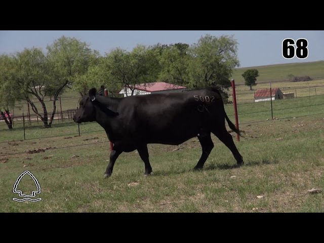Pearcy Angus Ranch Lot 68