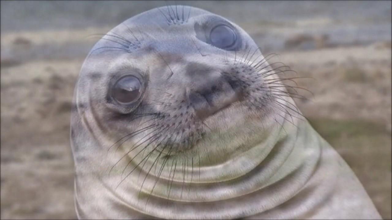 awkward seal - YouTube
