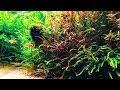 40 Gallon Aquascape Nature Aquarium | Aquascaping