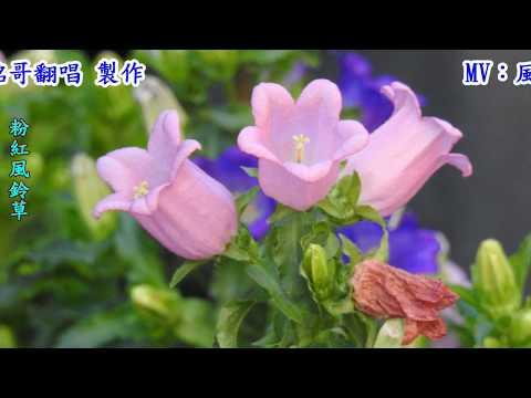 おんな酒(女人酒)1990(日語~堀內美和+翻譯)銘哥翻唱