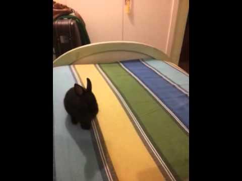 Un conejo que salta es un conejo feliz.