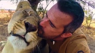 How Lions Say Hello | The Lion Whisperer