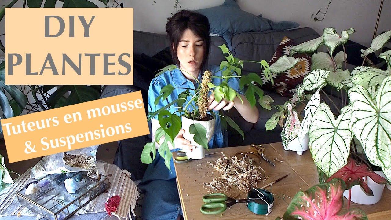 DIY Plantes d'intérieur - Tuteur en mousse et suspensions (super simples !)