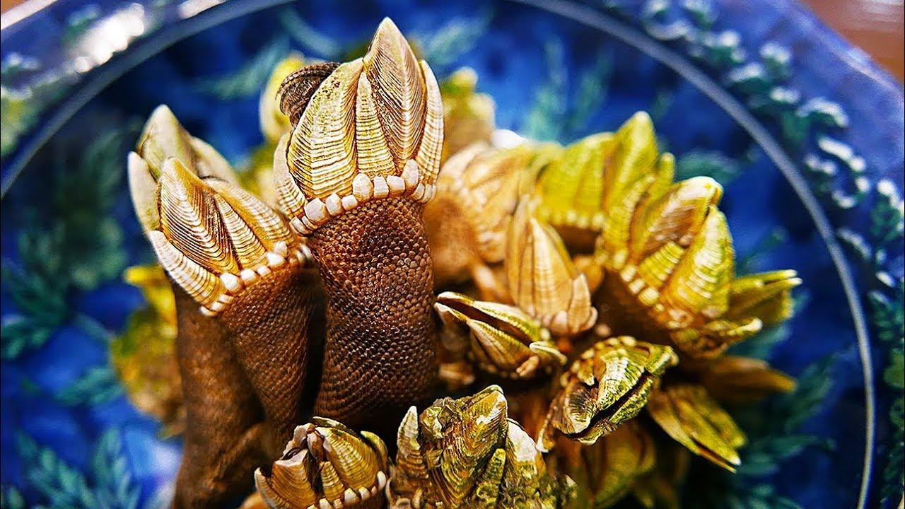 Japanese Street Food - TURTLE HANDS Barnacle Tempura Okinawa Seafood Japan