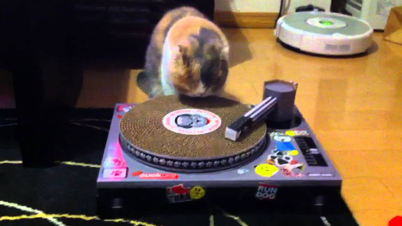 Cat Scratch Turntable - YouTube