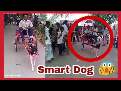 Smart Dog Drives A Home Mad Car | #India #USA #China | The World's First Driving Dog