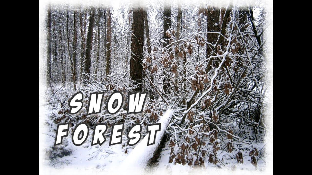 SNOW FOREST - Novosibirsk SIBERIA   WINTER 2020