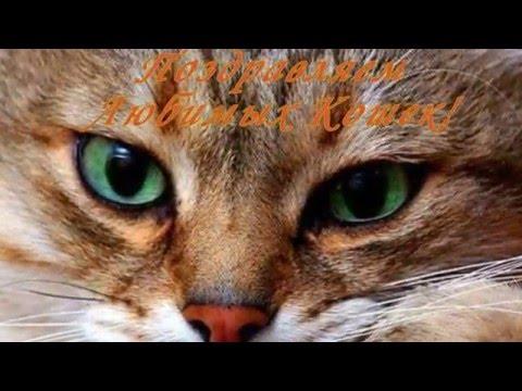 1 Марта День Кошек! Прикольное поздравление кошке.