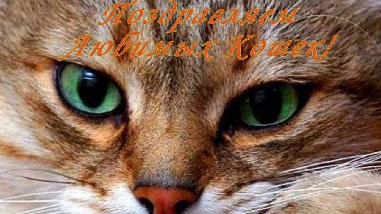 Прикольные поздравления день кошек фото 526