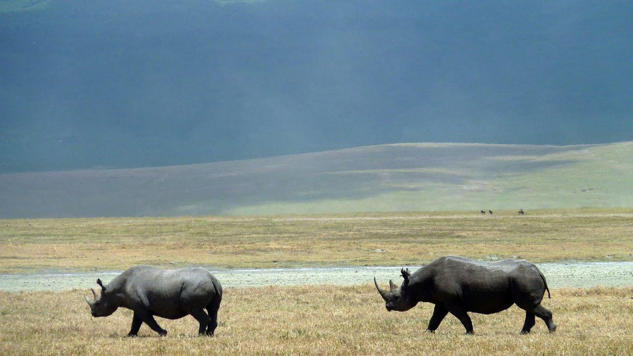 Ngorongoro Crater Tanzania In Hd Youtube